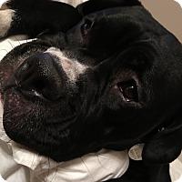 Adopt A Pet :: Zola Rae - Dayton, OH
