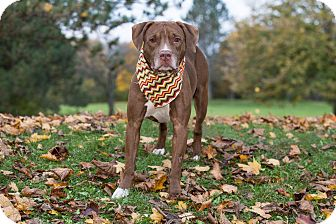 Terrier (Unknown Type, Medium) Mix Dog for adoption in Flint, Michigan - Brian