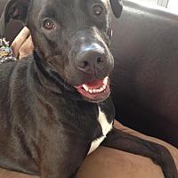 Adopt A Pet :: ZZ-Sherlock *courtesy post - Rancho Santa Margarita, CA