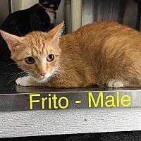 Adopt A Pet :: Frito - Waycross, GA