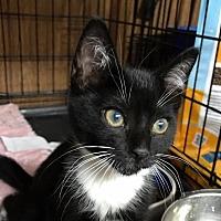 Adopt A Pet :: Thomas - Bensalem, PA