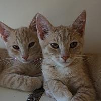 Adopt A Pet :: Rita & Madden - Burbank, CA
