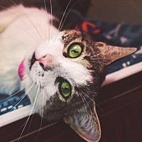 Adopt A Pet :: Hannah - El Paso, TX