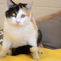 Adopt A Pet :: Pansey - Thomasville, GA