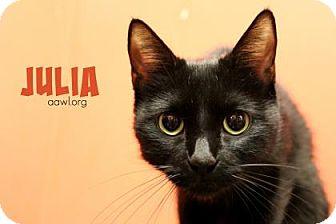 Domestic Shorthair Cat for adoption in Phoenix, Arizona - Julia
