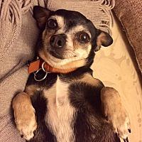 Adopt A Pet :: Della - Fort Atkinson, WI