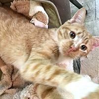 Adopt A Pet :: Sunkist - Youngsville, NC