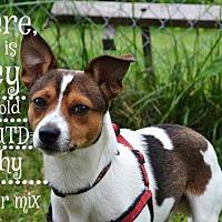 Adopt A Pet :: Surrey - Saginaw, MI
