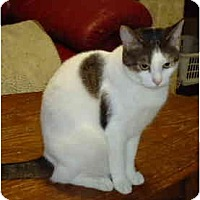 Adopt A Pet :: Zoey - Elmira, ON