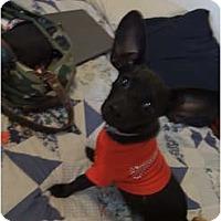 Adopt A Pet :: Cookie - Arlington, TX