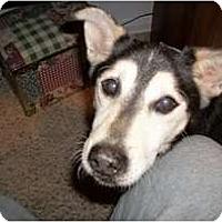 Adopt A Pet :: Thomas - Madison, WI