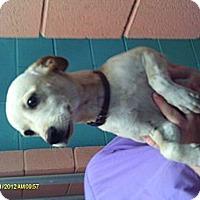 Adopt A Pet :: Pica - Niceville, FL