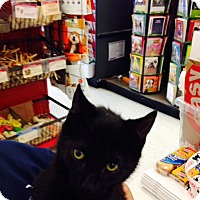 Adopt A Pet :: Marie - Riverside, RI