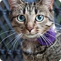 Adopt A Pet :: Heidi - Monroe, NC