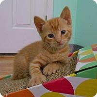 Adopt A Pet :: Robin - Pineville, NC
