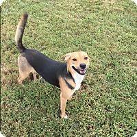 Adopt A Pet :: Daisy B - Russellville, KY