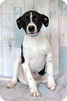 Labrador Retriever Mix Puppy for adoption in Waldorf, Maryland - Fredie- Adoption Pending