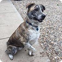 Adopt A Pet :: Oliver - Kansas City, MO
