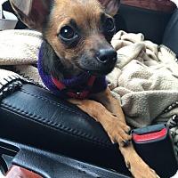 Adopt A Pet :: Jerry - Seattle, WA