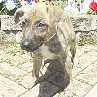 Adopt A Pet :: Faline - West Chicago, IL