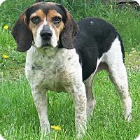 Adopt A Pet :: Winnie - Stockport, OH