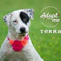 Adopt A Pet :: Terra - Pearland, TX