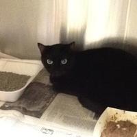 Adopt A Pet :: 35858518 - Land O'Lakes, FL