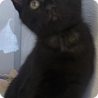 Adopt A Pet :: Onyx - Manning, SC