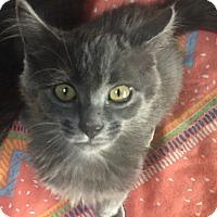 Adopt A Pet :: Zenzy - Encinitas, CA