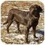 Photo 3 - Labrador Retriever Dog for adoption in Crumpler, North Carolina - Willow