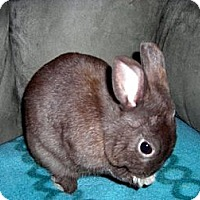 Adopt A Pet :: Peanut - Wethersfield, CT