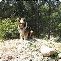 Adopt A Pet :: Hestia - Trabuco Canyon, CA