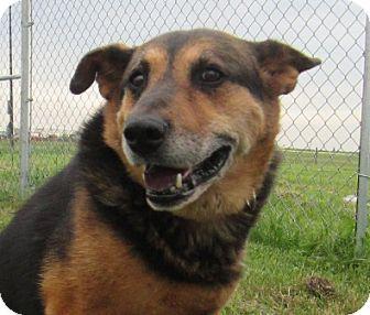 German Shepherd Dog Mix Dog for adoption in Lloydminster, Alberta - Abby