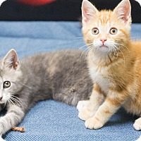 Adopt A Pet :: knick knack & paddy whack - Chicago, IL