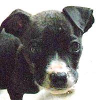 Adopt A Pet :: Baby Smalls - Oakley, CA