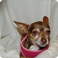 Adopt A Pet :: CHIKIS aka CHA CHA - Phoenix, AZ