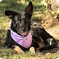 Adopt A Pet :: Kristy - Phoenix, AZ