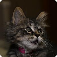 Adopt A Pet :: Hayden - Medina, OH