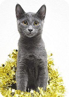 Domestic Shorthair Kitten for adoption in Dublin, California - Woody