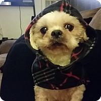 Adopt A Pet :: Sweetie - Santa Ana, CA