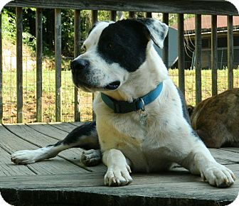 Mixed Breed (Medium) Mix Dog for adoption in Spring Valley, New York - flinch -$100