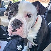 Adopt A Pet :: Kane - Roswell, GA