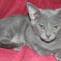Adopt A Pet :: Kevin - Miami, FL