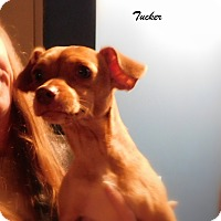 Adopt A Pet :: Tucker - Mooresville, IN