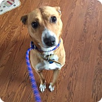 Adopt A Pet :: Willis - Rexford, NY