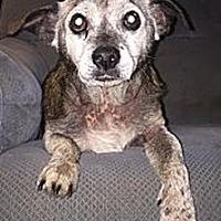 Adopt A Pet :: Archie - Grayson, KY