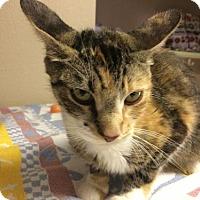 Adopt A Pet :: Eloise - Washougal, WA