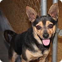Adopt A Pet :: Whiskey - Washington, DC
