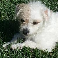 Adopt A Pet :: YOYO - Long Beach, CA