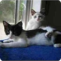 Adopt A Pet :: Checkers (with Mocha) - Portland, OR